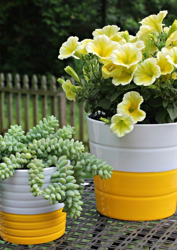 Planty Projects: DIY Bright Summer Pots
